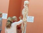 Skelett8
